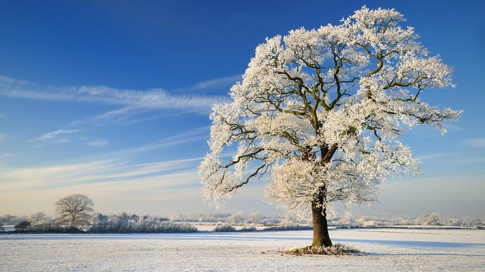 A snowed, flat, landscape, with a frozen tree in the foreground. It's sunny and the sky is blue.
