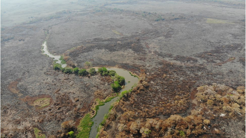 A few green trees stand among burnt land in Brazil's Pantanal