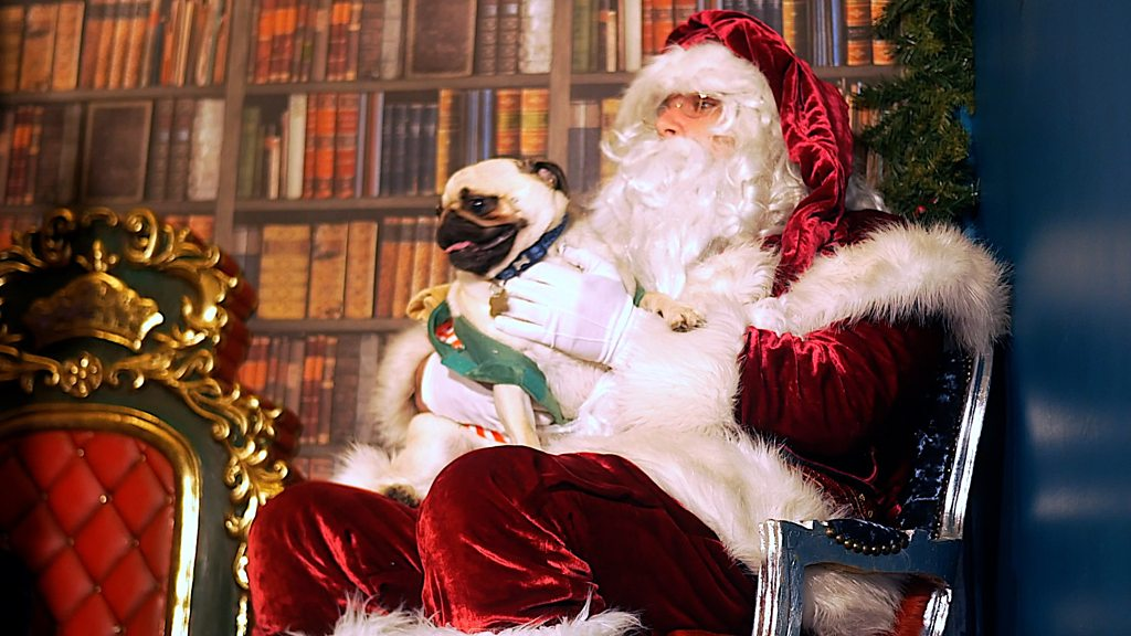 Santa Paws Grotto opens in Hayling Island