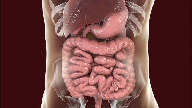 الأمعاء الغليظة