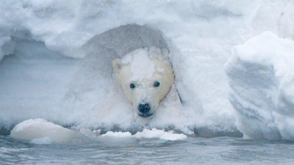 US holds first lease sale for Alaska's Arctic refuge