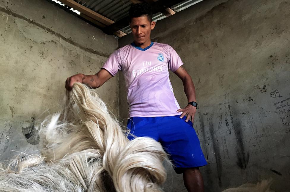 Un trabajador muestra las fibras de abacá