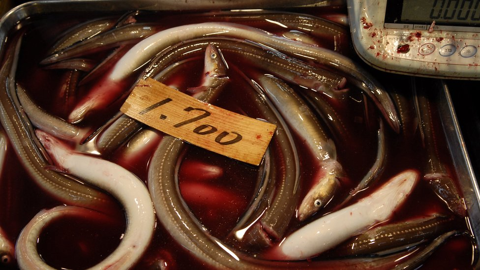Small eels in a dish