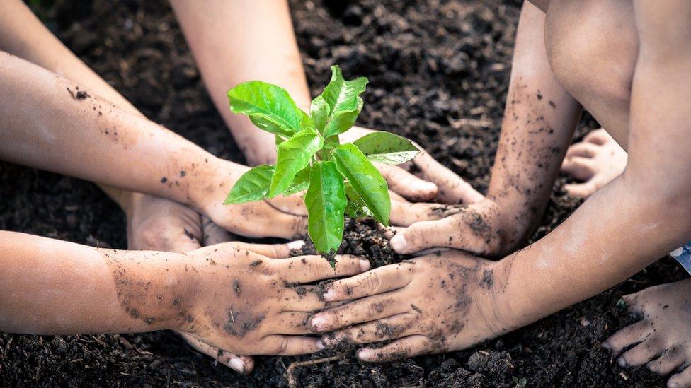 Niños con las manos sucias sembrando una planta