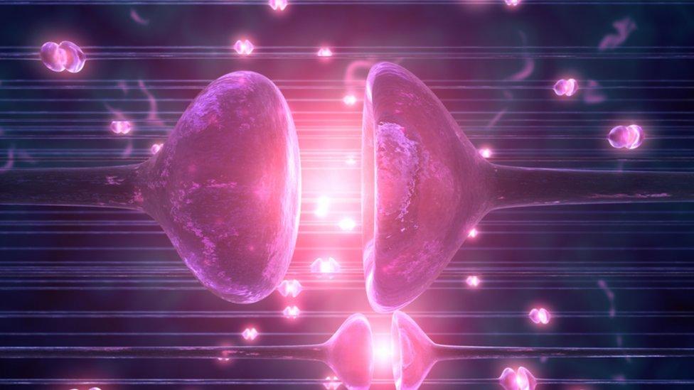 Una ilustración de sinapsis