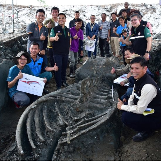 Whale skeleton with researchers