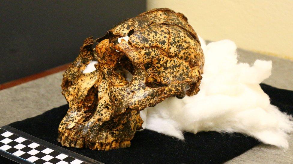 Lobanja stara dva miliona godina primerak je parantropus robustus