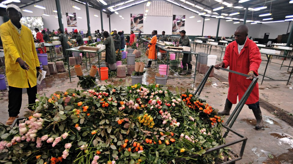 Workers push a cart loaded with discarded flowers at a warehouse in Kenya