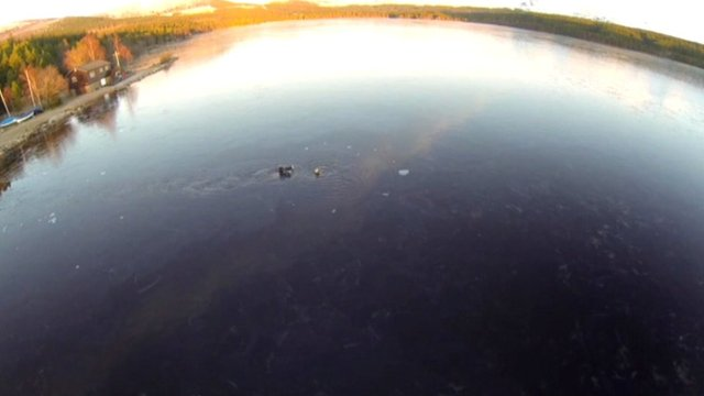 A man rescues a dog in Loch Morlich