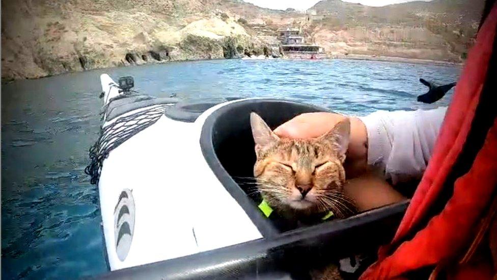 Kayak cat