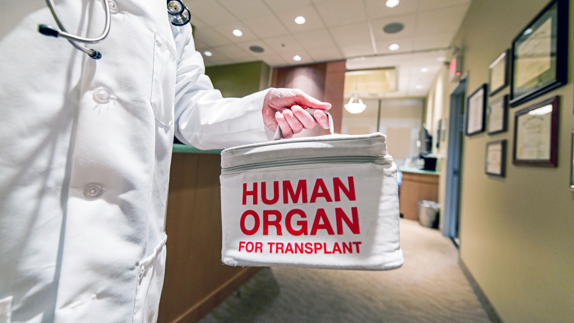 A doctor holding an organ donation bag