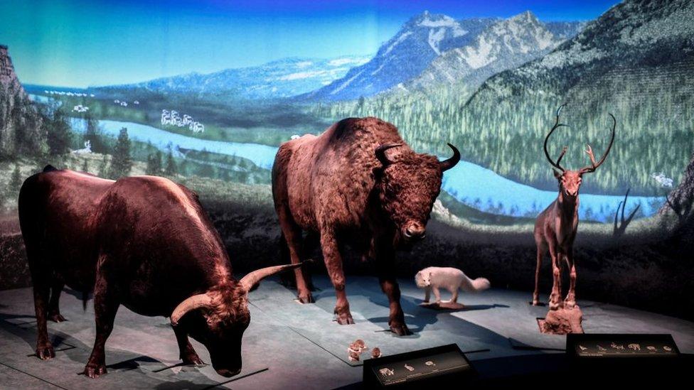 Exposición sobre los neandertales en el museo del Hombre en París, Francia