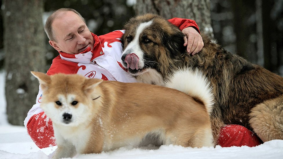 Putin frolicking in the snow with his dogs, 2013
