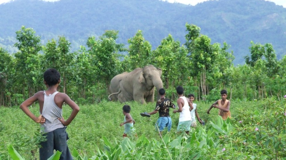 Villagers face off with an elephant in India