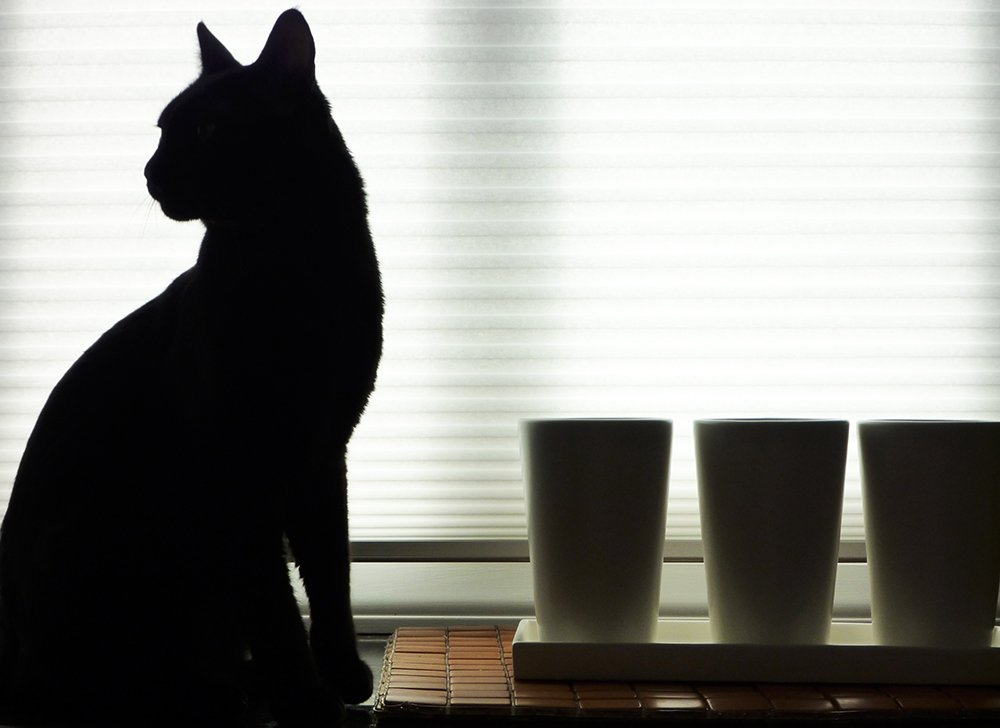 A cat looking out of a window