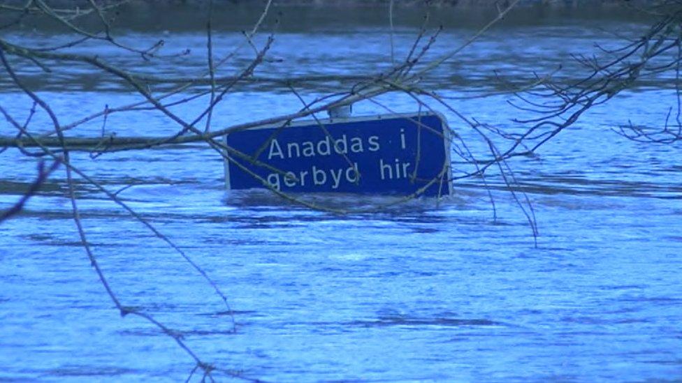 Ffordd yn ardal Llechryd dan ddŵr