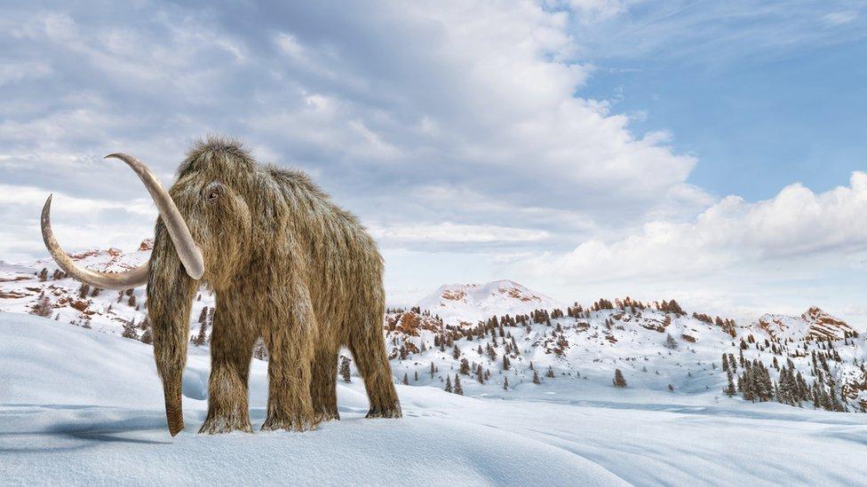 Ilustración de un mamut lanudo caminando en la nieve.