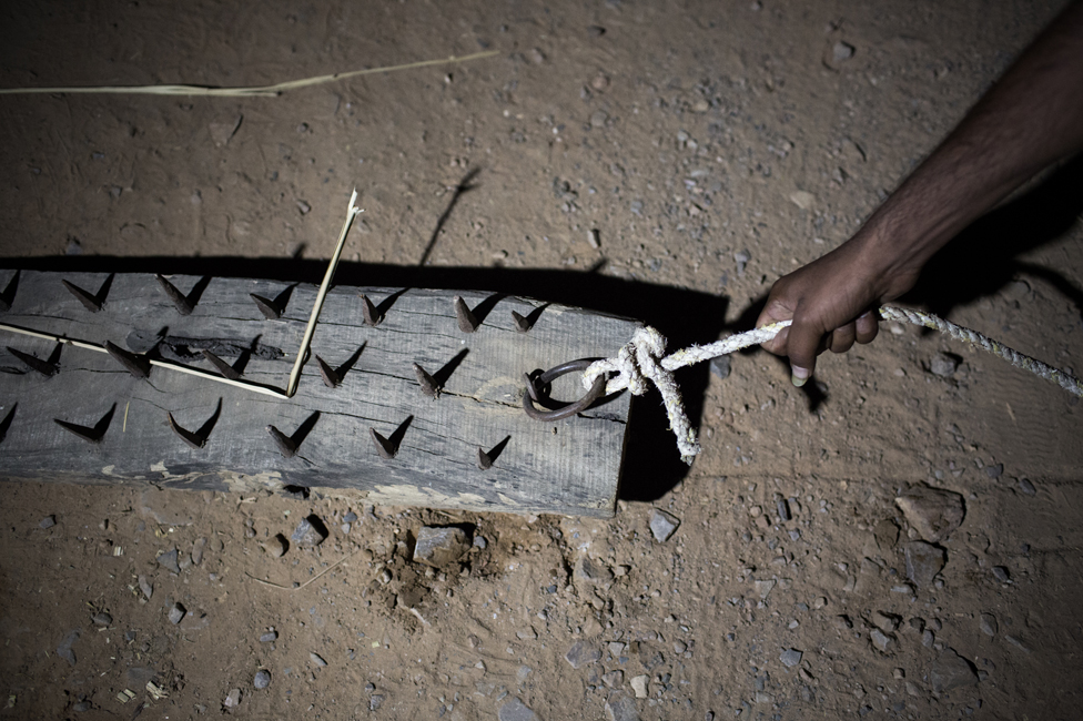 Nails used by cow vigilantes to force lorries to stop