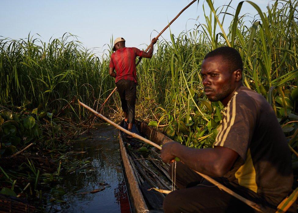 zmije u Kongu