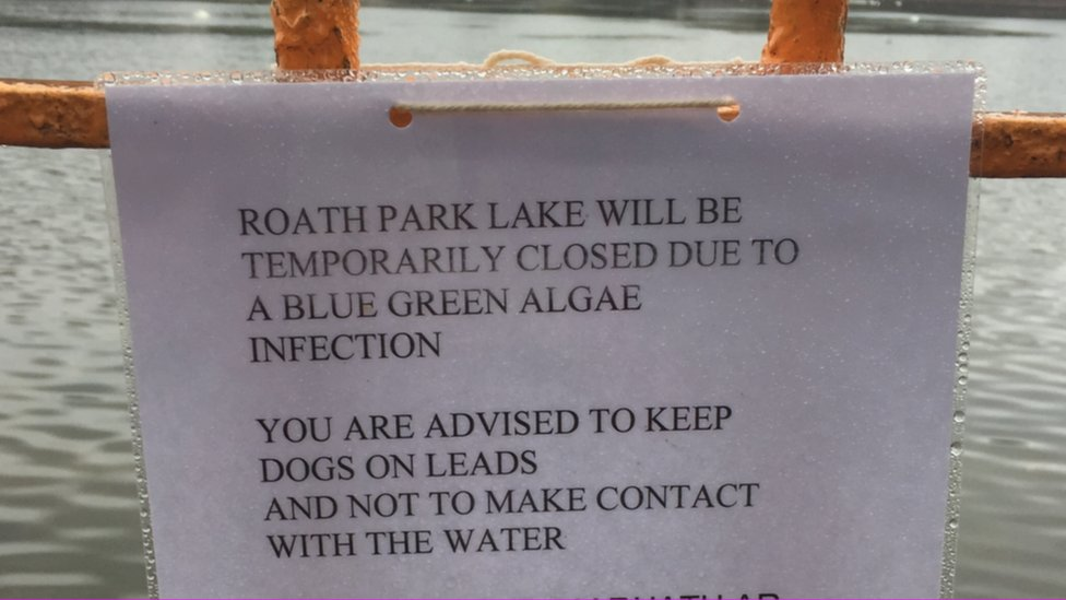 Signs have been erected around the lake