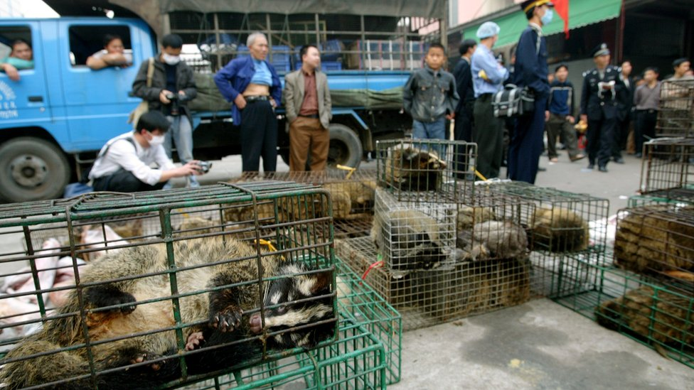 Officials seize civet cats in Xinyuan wildlife market in Guangzhou to prevent the spread of the SARS disease