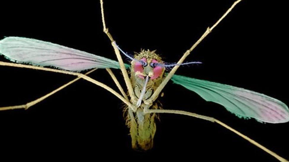 التصديق على أول عقار لمعالجة مرض الملاريا