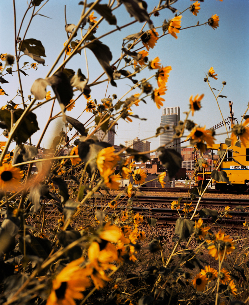 Omaha, Downtown Through Sunflowers