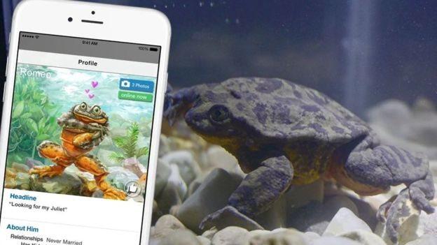 Romeo junto a un celular que muestra su perfile en Match.com