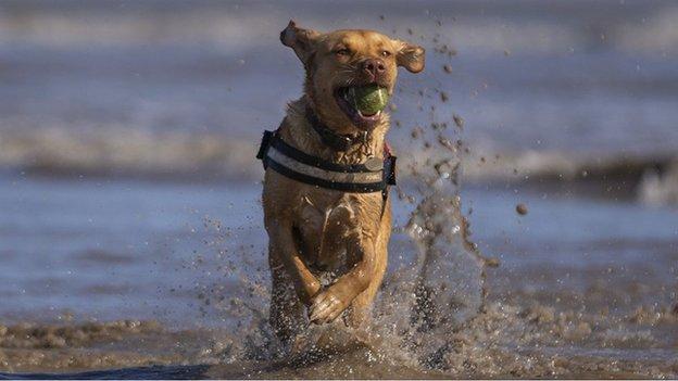 Wirral Council in dog beach ban U-turn after public backlash
