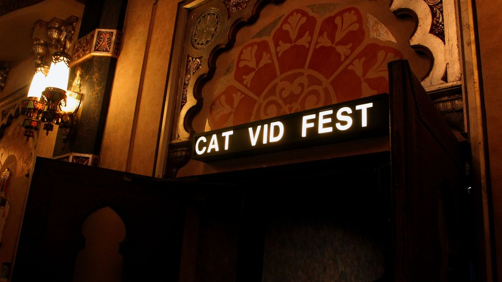A cinema sign shows 'Cat Vid Fest' above an ornate door