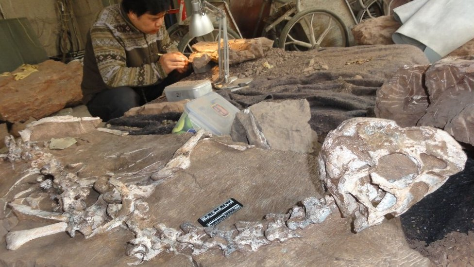 Newly discovered dinosaur, Tongtianlong limosus