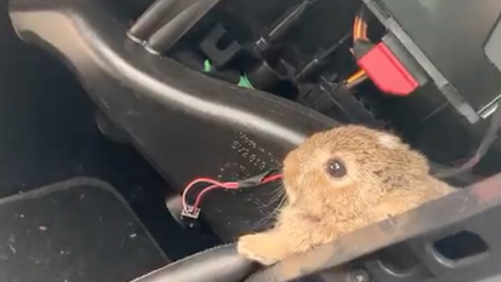The rabbit seen peaking out from the engine compartment
