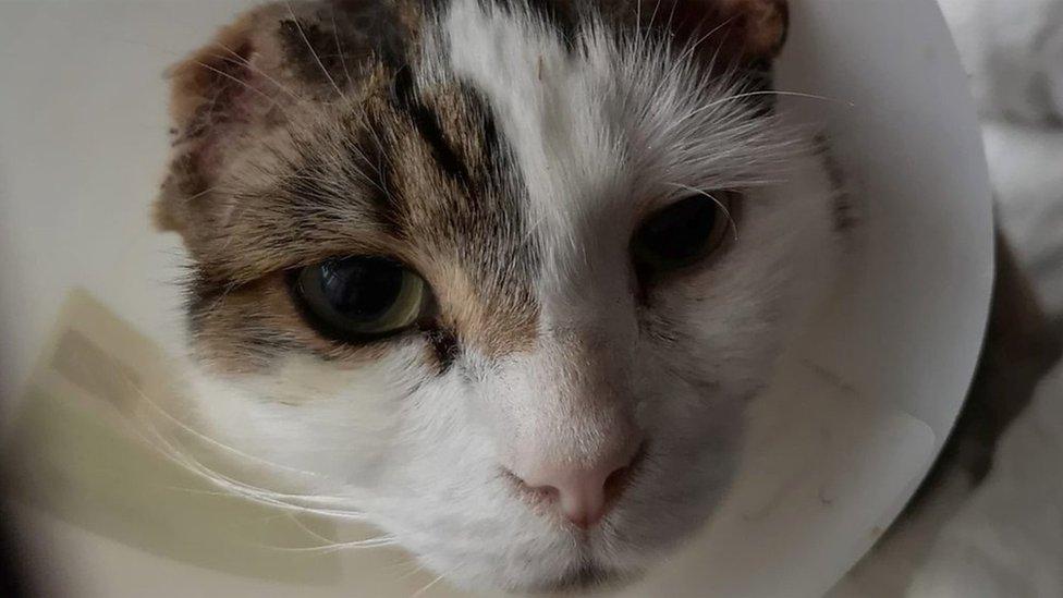 Norwich cat mutilations: Police investigate attacks