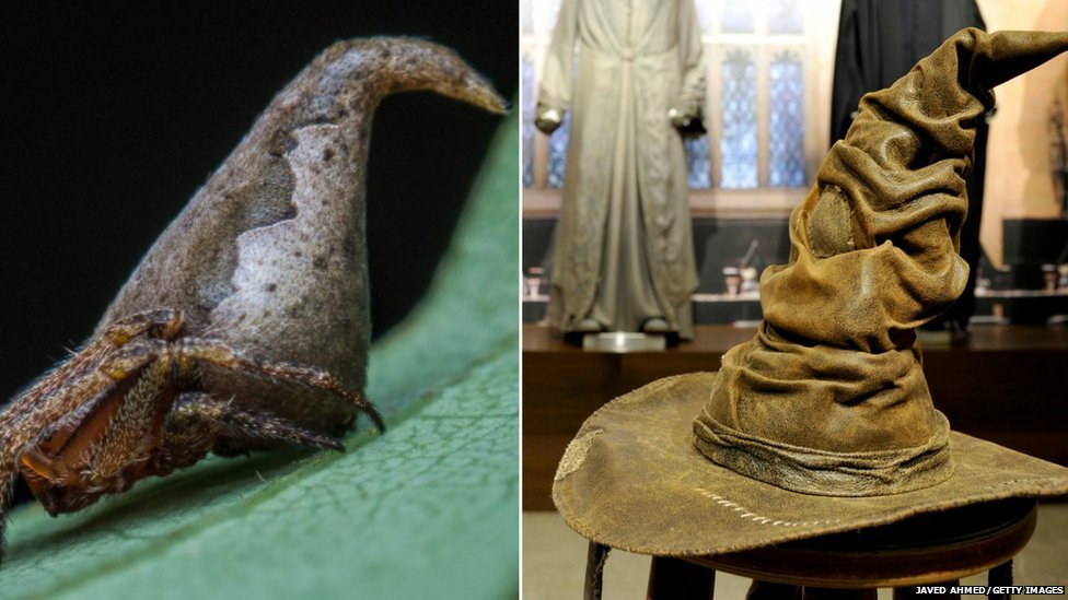 The Eriovixia Gryffindori (R) pictured next to the Sorting Hat (L)