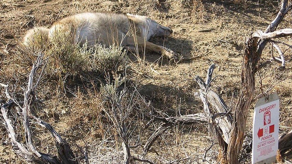 Animal muerto por bomba