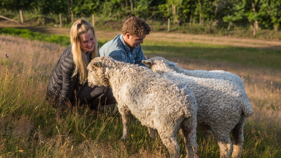 Lewis and Flora with some of their sheep