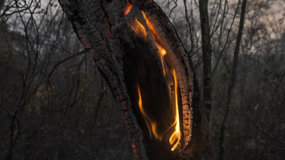 Tronco ardiendo.