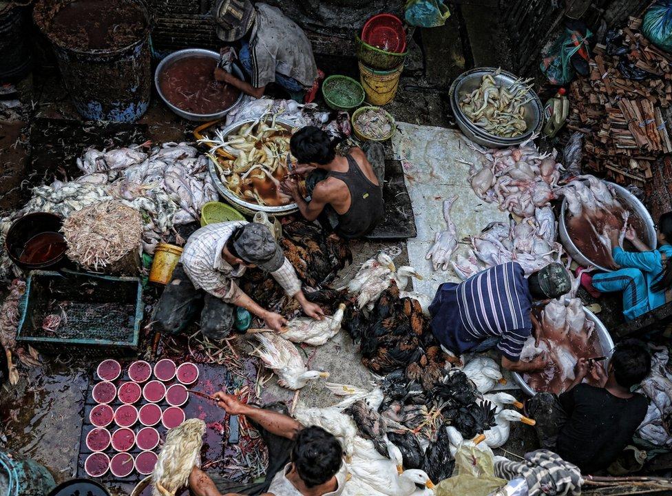 Poultry market in Phnom Penh