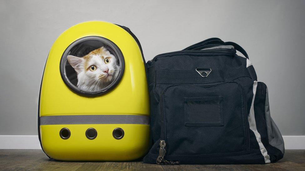 Cat in a bag (file image)