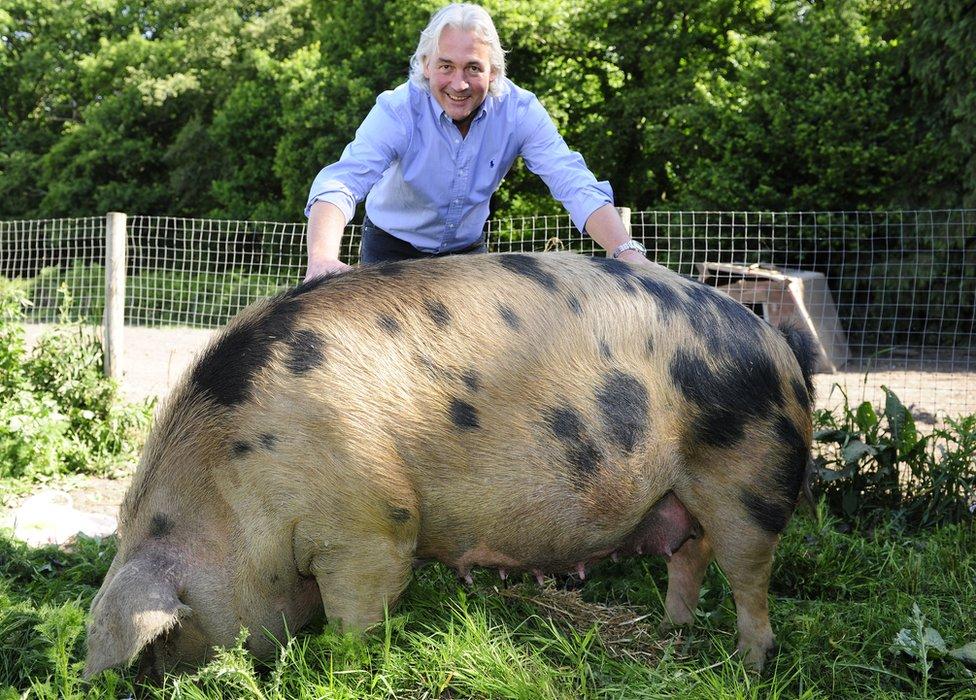 Robin Hutson y un cerdo