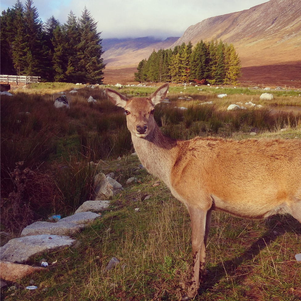 Jemma Donnelly got up-close with this inquisitive deer at the Kingshouse Hotel in Glencoe.
