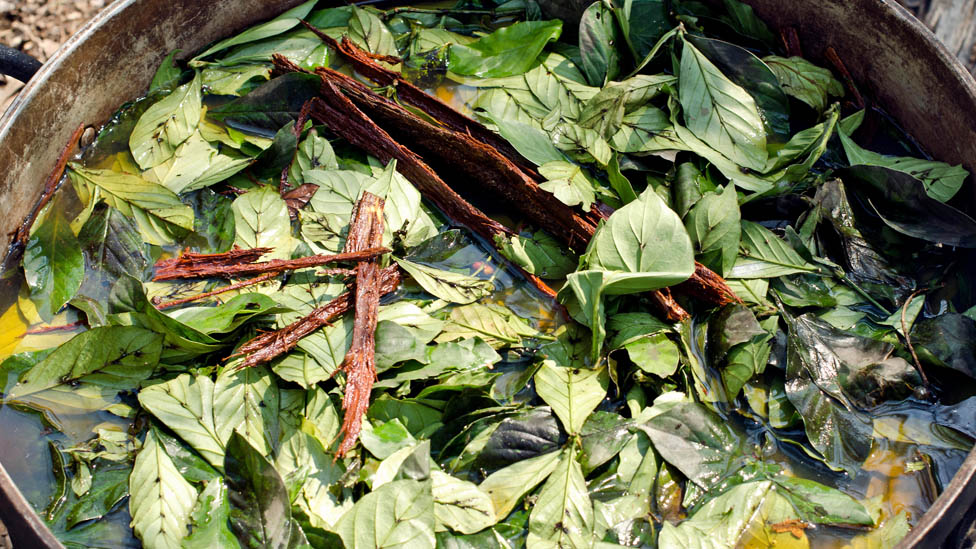 Ayahuasca being brewed before participants experience the need to start purging during a ceremony