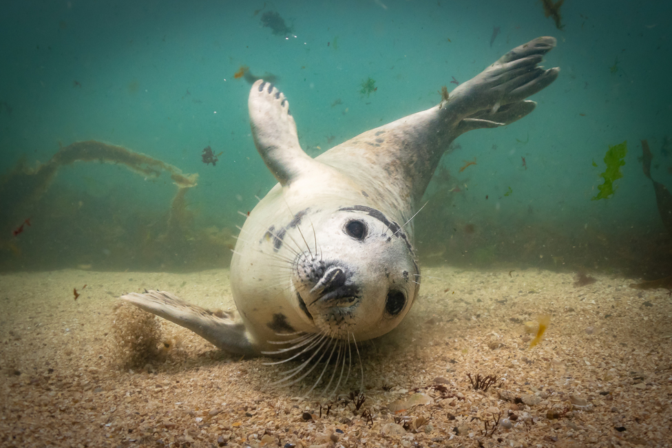 A young seal