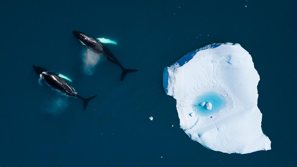 Agua y hielo en el Ártico