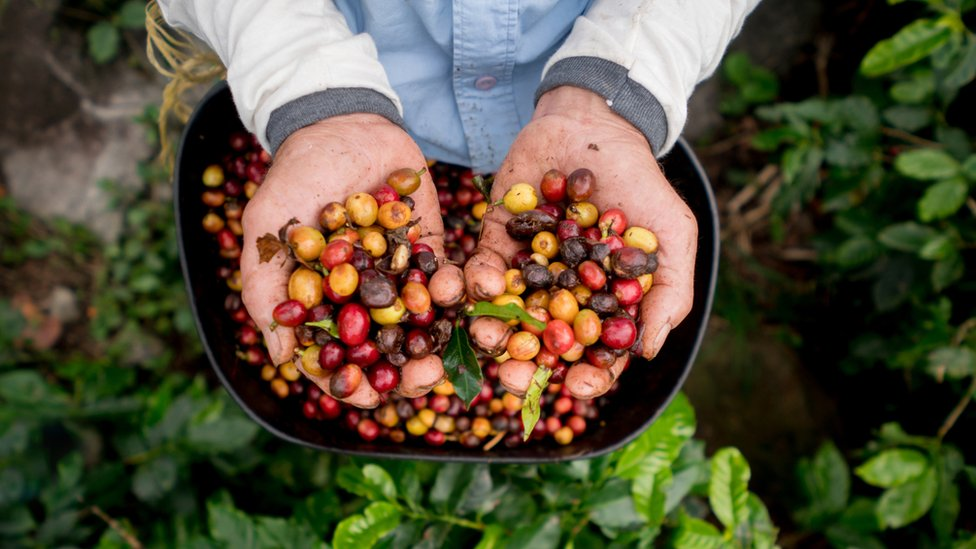 The coffees you've never heard of which face extinction