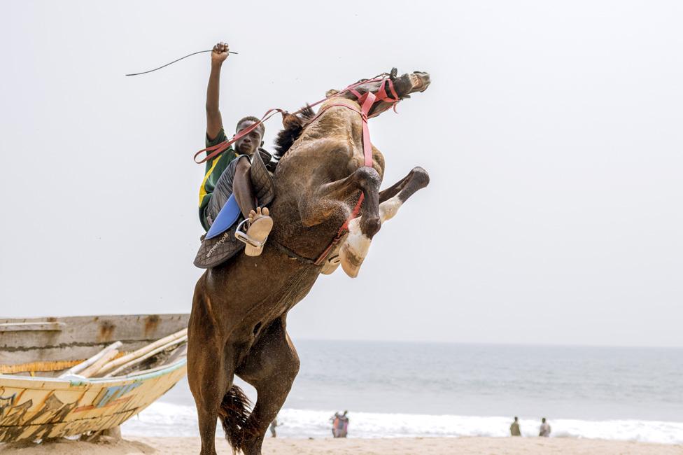 konj na plaži