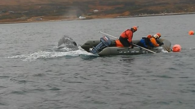 Rescuers free a humpback whale