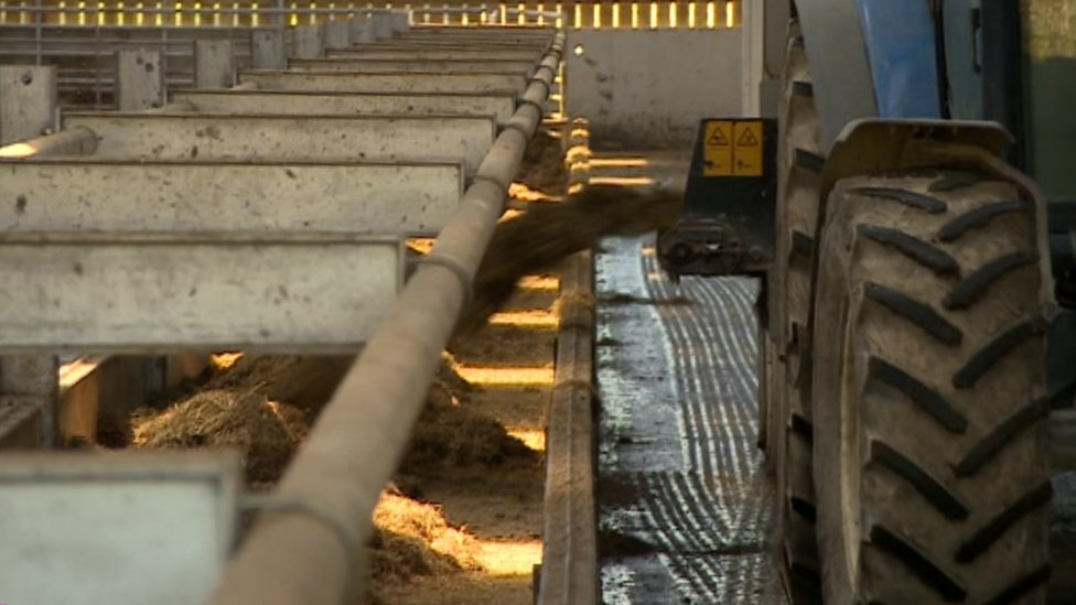 Picture of tractor filling feed troughs