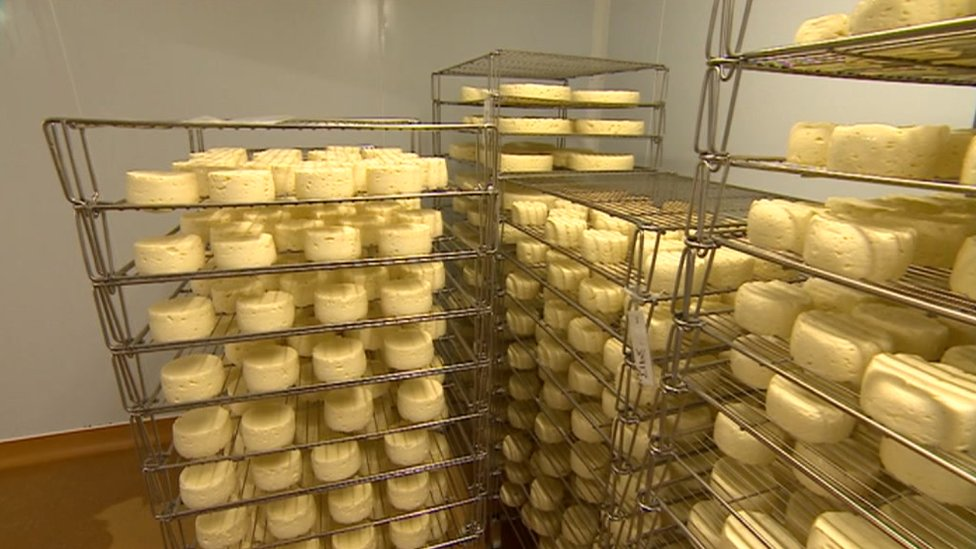 A stack of Traditional Welsh Caerphilly Cheese in a dairy
