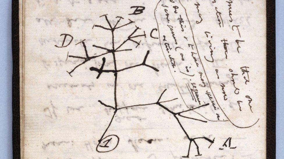 مخطط شجرة الحياة من ضمن المفقودات